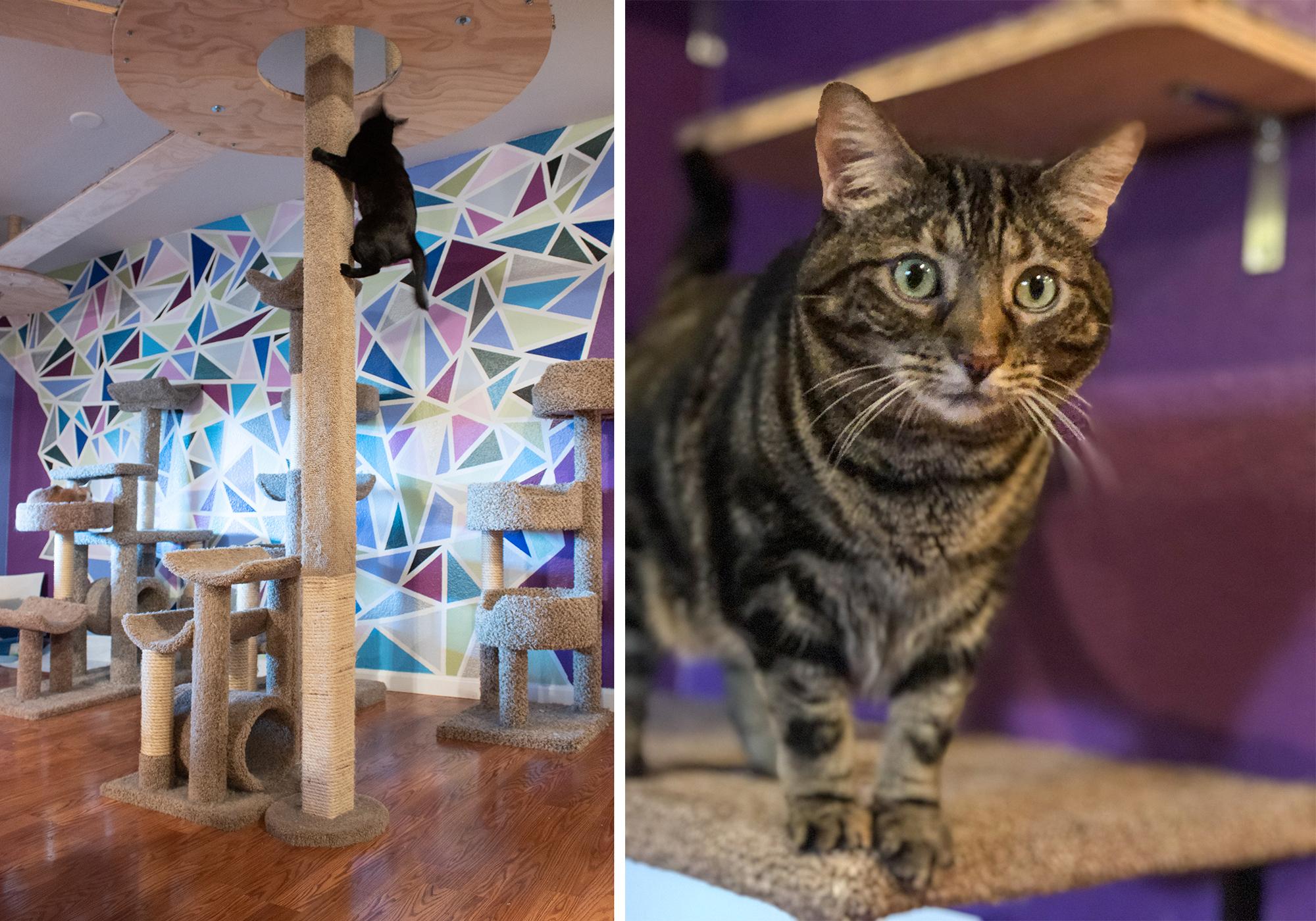 Cat Climbing Pole Catification DIY